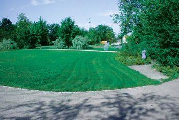 Ausgleichspflanzungen und Ansaaten