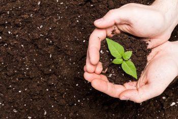 Hände halten Erde mit kleiner Pflanze