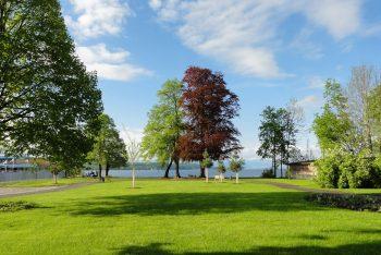 Eine idyllische grüne Wiese mit Bäumen unter blauem Himmel