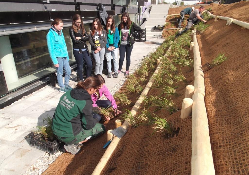 Schülerinnen bepflanzen beim Girls'Day einen kleinen Hang.